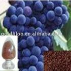 Grape Seed Extract / Proantocyanidins(OPC)95%