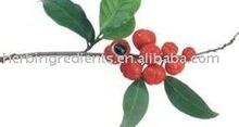 High Quality Guarana Seed 10% Extract