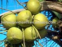 Saw Palmetto berry Extract powder