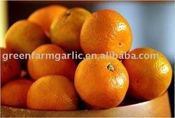 2011 Nanfeng baby mandarin orange
