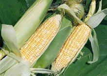 Atrazine 90% WDG,Control weeds in Corn, Herbicides/weedicides, agrochemical