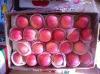 2012 fresh juicy fruit red apple
