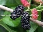 Mulberry Juice Powder