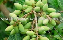olive basic oil(bulk)