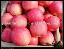Fresh red Chinese Fuji Apple in yantai