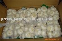 regular white fresh garlic