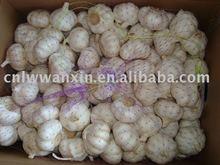 fresh garlic wanted