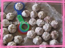 Garlic Plantation (4.5, 5.0, 5.5, 6.0cm)