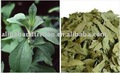 Stevia de qualité