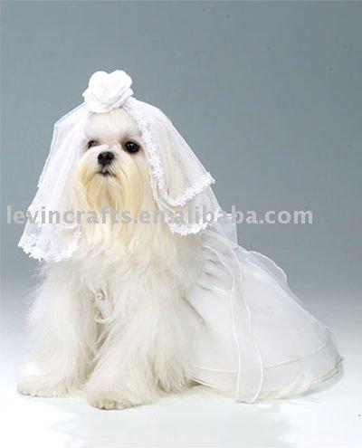 Dog Wedding Wedding Outfits Dogs on Dog
