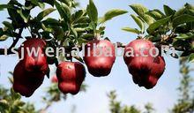 Class A RED hua niu apple