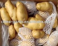 China Fresh Potato