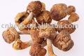 champignon sec d'agaricus (blazei d'agaricus, reishi, shiitake, tremella etc.)