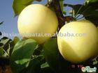 super fresh ya pear