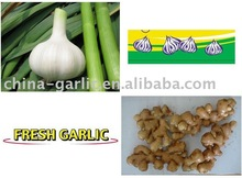 China Fresh Ginger and Garlic