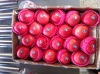 High quality China Yantai fresh red Fuji apple direct supplier