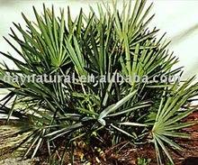Saw Palmetto P.E.--Fatty Acid(HPLC/UV 30-60%)
