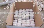 new crop fresh normal white garlic(5cm)