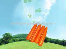 fresh vegetable of carrot