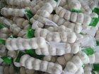 snow white garlic 250g/bag crop 2011