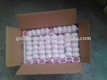 Chinese pure white garlic,Super quality,