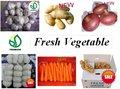 Vegetais frescos ( alho, gengibre, cebola... ) - nova safra