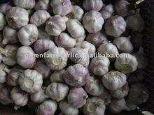 2011 fresh white garlic
