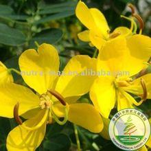 Cassia tora seeds p.e.