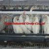 farm chicken cage factory