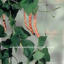 Bean Plant Support Net