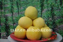 pommes golden delicious/fresh golden apple hot sale in 2011