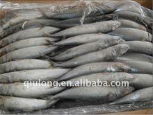 fresh frozen mackerel fish 200-300g