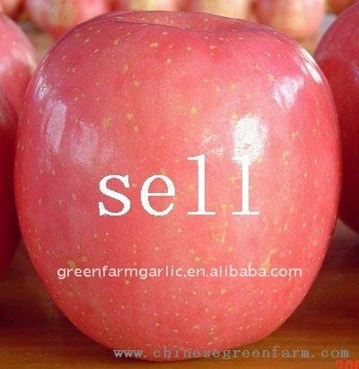 fruit apple