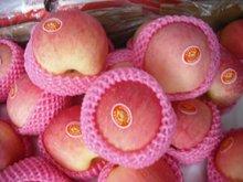 red fuji apple latest crop