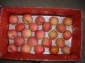 fresco di mela jonagold