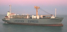LCL container,sea cargo freight to Africa