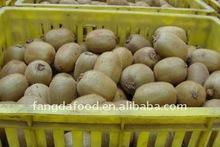 Supply golden chinese kiwi fruit;sweet kiwi