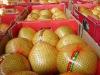 Fresh Honey Pomelo Fruit New Crop