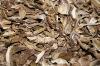 Dried Boletus/Cepe Slice Grade B 2011