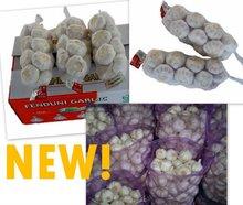 Fresh Chinese Snow/Super White Garlic 2011 NEW!!