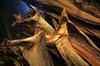 Best Dried Stockfish Cod,Saithe,Cod Fish, Head - Stockfish