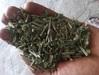Cymbopogon Citratus Manufacture & Supplier in India