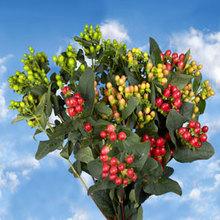 flower exporters and growers kenya