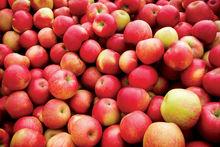 Fresh 2014 Apple
