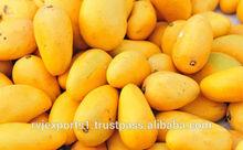 mango pulp importers in dubai