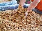 A GRADE ALMOND, Nuts, Cashew, Diced almond