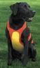 custom dog Remington Dog Chest Protector dress clothes