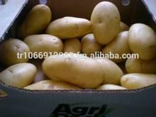 Premium Quality Spunta Potatoes