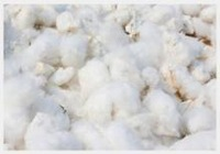 High Yield Cotton seeds for Planting with High Sprouting