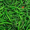 Sell Green Chilli Pepper , Pakistani green chilli Pure and Fresh Top quality bulk price